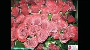 Алые Розы Песню Королева
